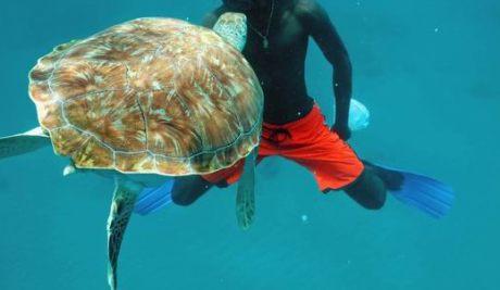barbados catamaran guy feeding turtle