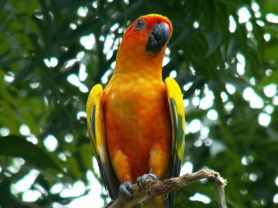 Graeme Hall parrot